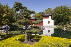 Pine tree growing in yellow flowerbed with pond and pretty pavilion in Montreal's Botanical Gardens stock images