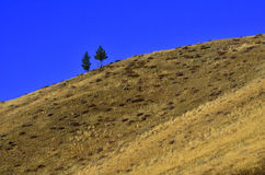 Pine Tree Hill Top Stock Image