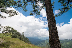 Pine tree on the hill Stock Image