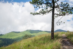 Pine tree on the hill Stock Photo