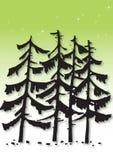 Pine tree illustration Stock Photos