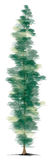 Pine Tree. An illustration of a Pine tree Royalty Free Stock Image