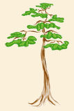 Pine tree. Illustration of the tall pine tree made in water color style isilated on the white background Stock Images