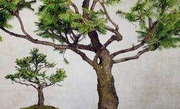 Pine tree isolated stock photos