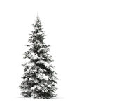 Pine tree isolated on white Stock Photo
