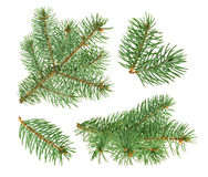 Pine tree isolated on white. without shadow Royalty Free Stock Photo