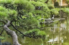 Pine tree and Japanese heron in the Shinji Pond in the public ga. Rden of Hibiya Park bordering the southern moat of the Imperial Palace. The word Shinji is royalty free stock photos