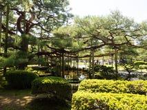 Pine tree in Kenrokuen garden Royalty Free Stock Images