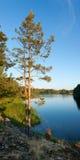 Pine tree on Ladoga lake shore Royalty Free Stock Photo