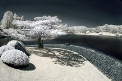 Pine Tree by the Lake in Infrared Stock Photography