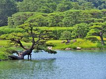 Pine tree with lake in Ritsurin Garden Royalty Free Stock Photos