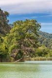 Pine tree on lake shore Stock Photo