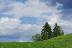 Pine tree landscape. With clouds stock image