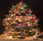 Pine Tree with lights Royalty Free Stock Images