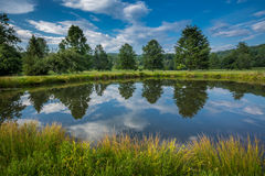 Pine and tree lined pond during summer Royalty Free Stock Photos