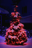 Pine tree lit for christmas with red lights Stock Images