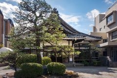 A Pine Tree lit by the sun in front of a Shrine in Kyoto. A Pine Tree lit by the sun in front of a Shrine in Gion District, Kyoto, Japan royalty free stock photos