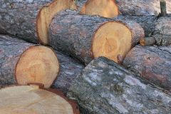 Pine tree logs Royalty Free Stock Photos