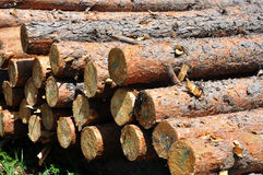 Pine tree logs Royalty Free Stock Photo