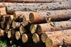 Pine tree logs royalty free stock photo