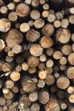 Pine tree logs Stock Photo