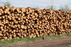 Pine Tree Logs. Royalty Free Stock Photo