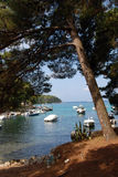 Pine tree  in Mali Losinj island,Croatia. Pine tree and motor boats in Mali Losinj with a forest and blue adriatic see in background Royalty Free Stock Photos