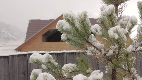Pine tree with melting snow on a wooden house background.  stock video footage