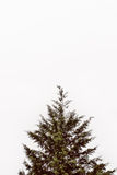 Pine Tree. Minimalist shot of a pine tree against a cloudy sky Royalty Free Stock Images