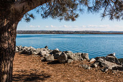 Pine Tree on Mission Bay in San Diego Royalty Free Stock Photos