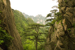 Pine tree and the mountain, china Stock Photo