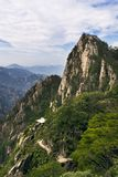 Pine tree in mountains Royalty Free Stock Images