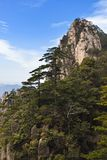 Pine tree in mountains Stock Photography
