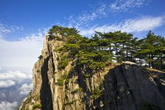 Pine tree in mountains Stock Photo