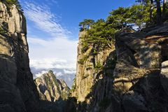 Pine tree in mountains Stock Image