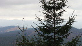 Pine tree in mountains in a landscape stock video footage