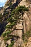 Pine tree on mountainside. Pine tree on steep rocky mountainside Royalty Free Stock Photos
