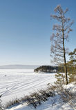 Pine tree near a lake Royalty Free Stock Image