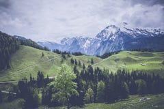 Pine Tree Near Snow Covered Mountain Photo Stock Photo