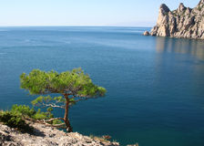 Pine tree next to the azure sea and rock Stock Images