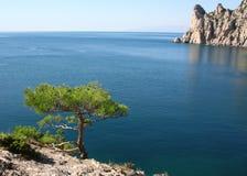 Pine tree next to the azure sea and rock. Ukraine. Crimea peninsula. The Black Sea. Pine tree next to the azure sea and rock in the morning Stock Images