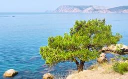 Pine tree next to sea Stock Photos