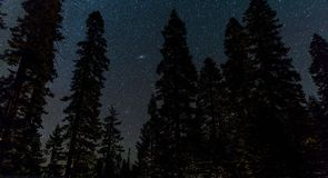 Pine Tree on Nighttime Royalty Free Stock Images