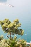 Pine Tree Over Amalfi Coast Stock Photography