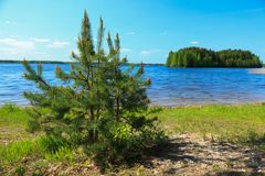 Pine tree over a lake Royalty Free Stock Image