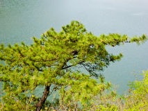 Pine tree over a lake Royalty Free Stock Photography