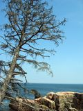 Pine tree over the ocean Stock Photos