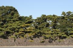 Pine tree park Royalty Free Stock Photo