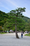 Pine tree and people travel and walking in garden at Arashiyama. On July 12, 2015 in Kyoto, Japan Stock Photo