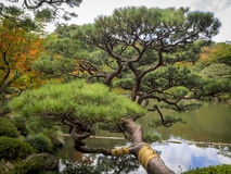 Pine tree and a pond Royalty Free Stock Photos